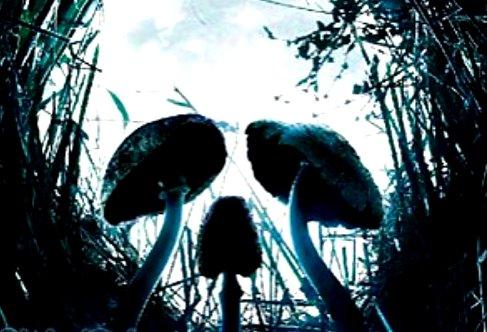 В Волгоградской области организована проверка по факту смерти школьницы в результате отравления грибами